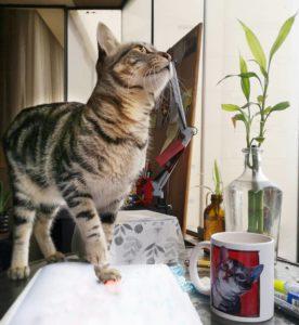 nalah gato taza ilustracion petlover