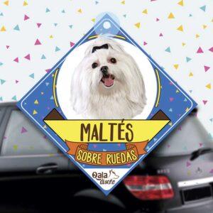 Colgante de auto de perro raza bichon maltes