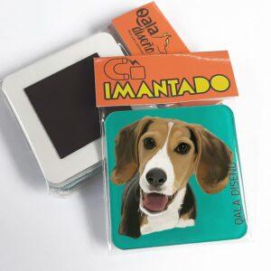 imantado beagle